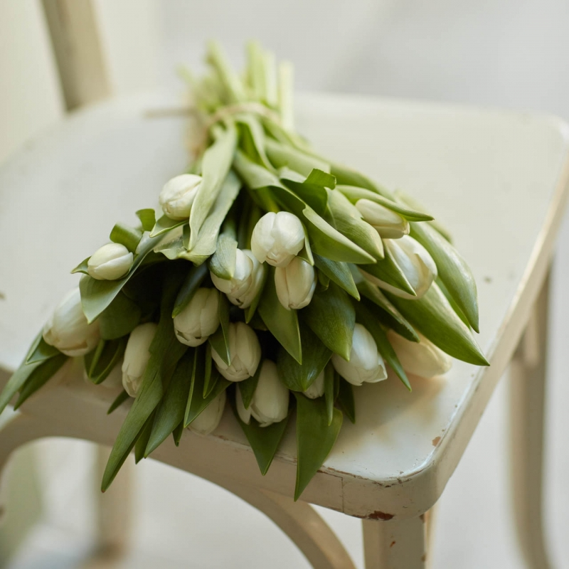 Botte de tulipes blanches