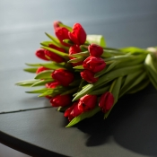 Botte de tulipes rouges